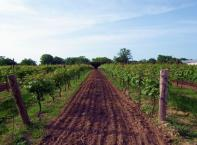 Block 36 #3605 - Super Bowl Game Day Party Package